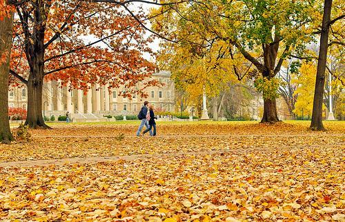 mùa thu - Cảm nghĩ về mùa thu