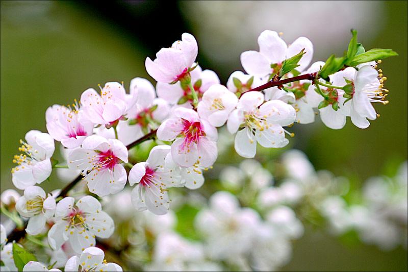phan tich bai tho voi vang cua xuan dieu - Phân tích bài thơ Vội Vàng của Xuân Diệu