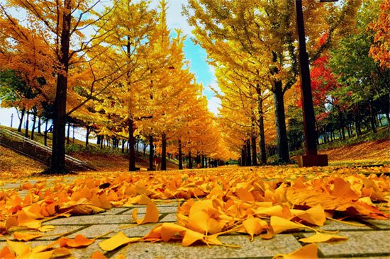 Tả mùa thu trên quê hương em