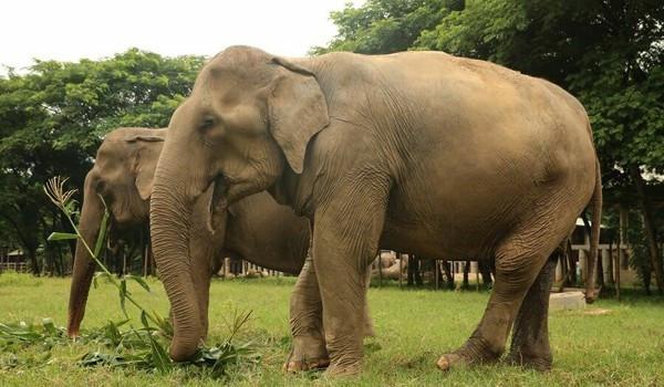 Tả con voi mà em từng được nhìn thấy