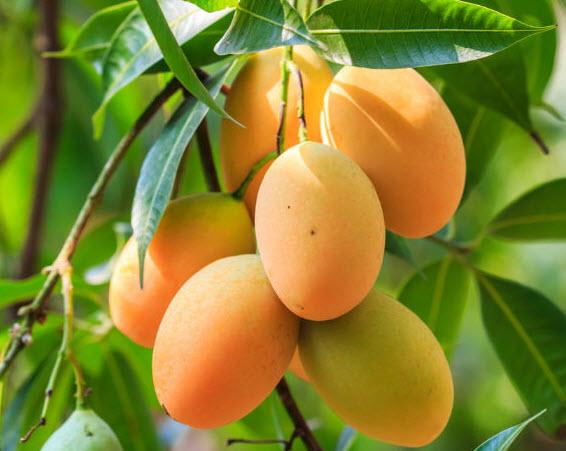 Tả loại cây ăn quả mà em thích nhất